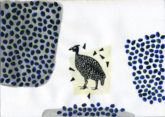 gallinaguinea